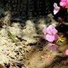 Maltos flora ir fauna