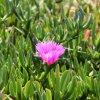 Džersis - spalvinga gėlių sala