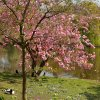 Pavasaris Londone