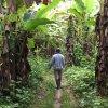 Džiunglėse