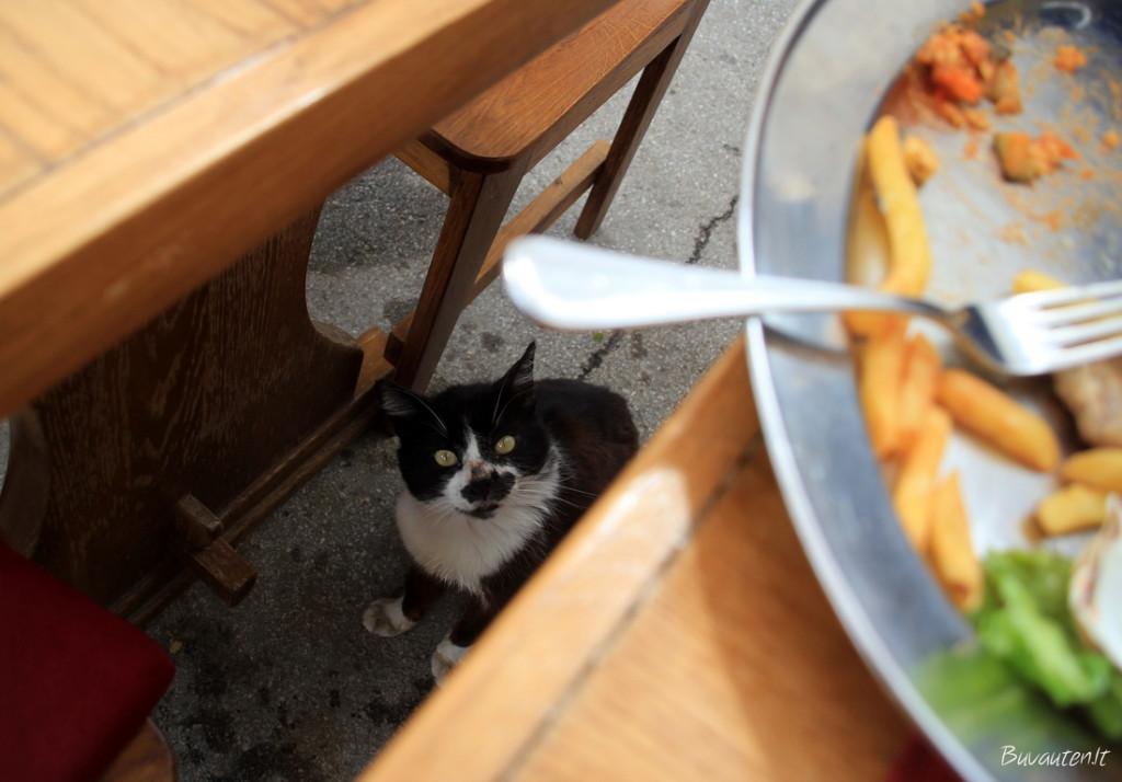 Maisto prašytojas