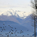 Kelionė po Šiaurės Italiją: Komo ežeras
