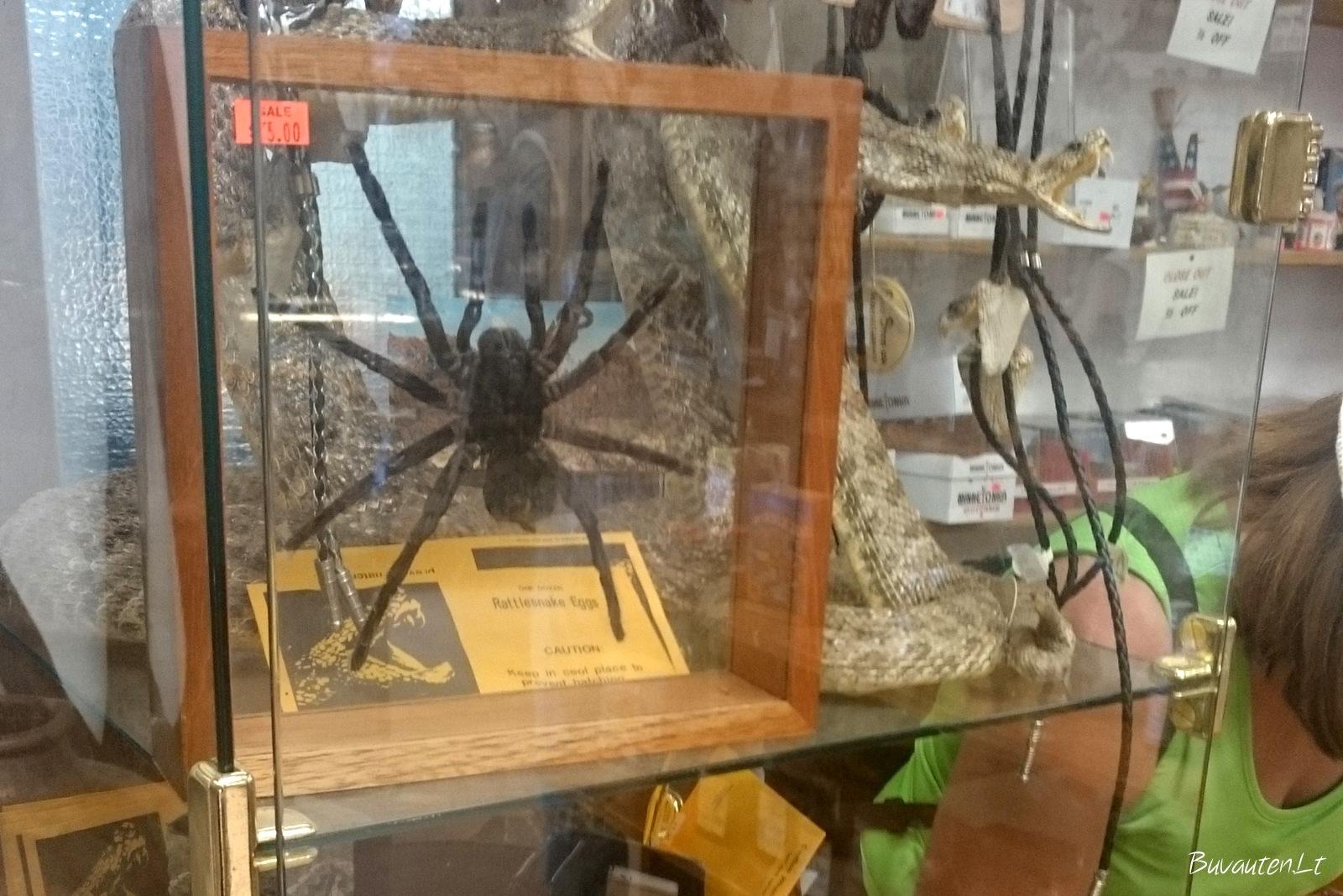 ...bei vorų ir gyvačių iškamšų. Kokią lauktuvės norėtum? :)
