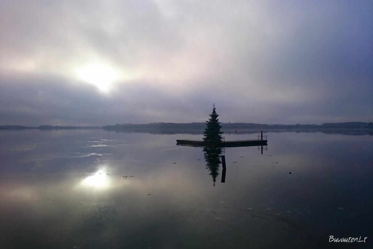 Masčio ežero eglutė