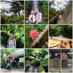 """Kornvalio """"Eden Project"""" – tropikai Anglijoje!"""