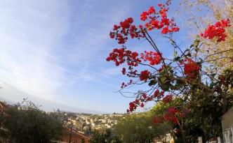 Gėlės Sanreme žydi net žiemą