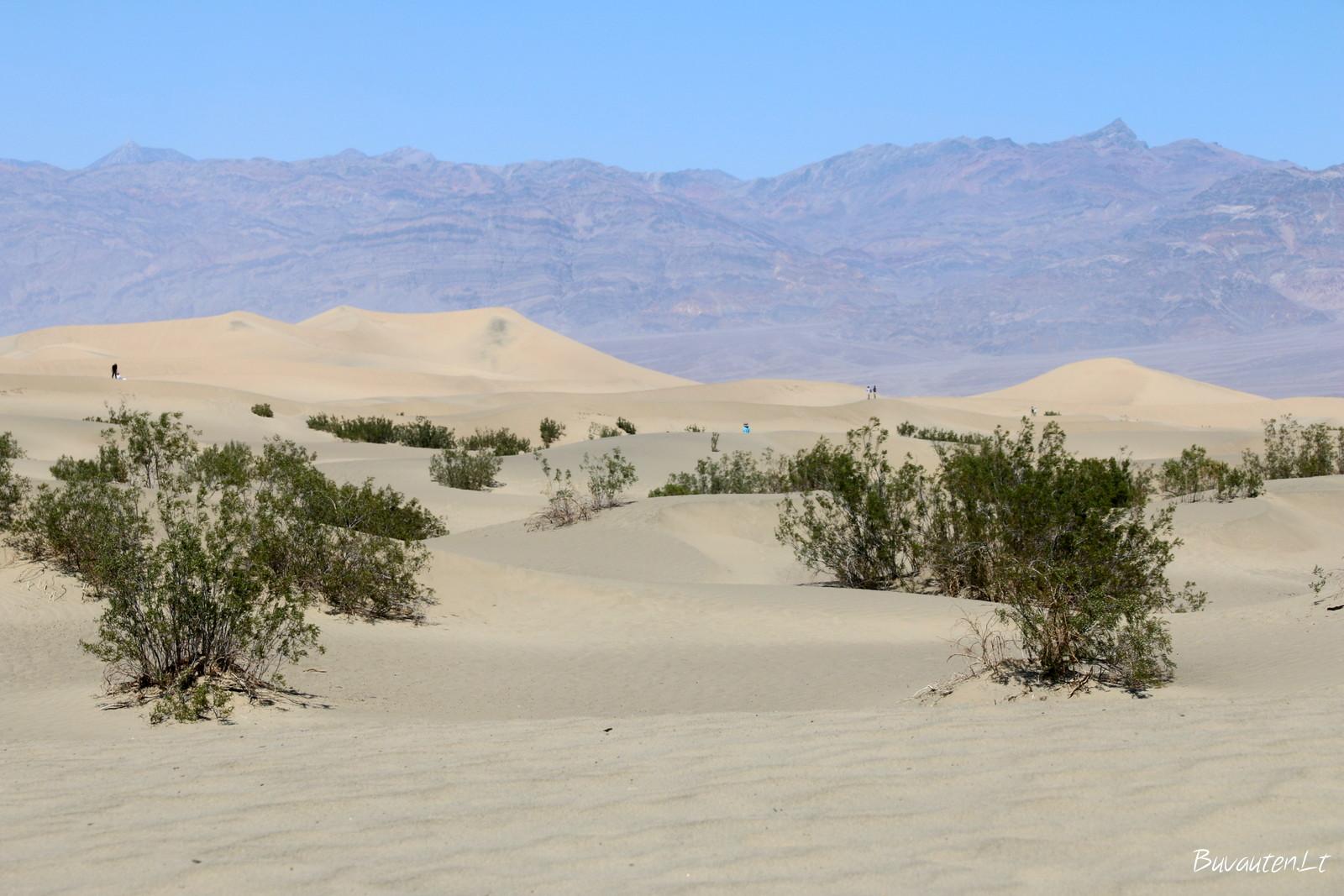 Smėlio kopų dykuma, kur stebėjomis lyg auksu tviskančiu smėliu