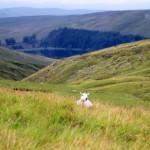 Laisvalaikis Velse: maršrutas į Brecon Beacons viršūnę