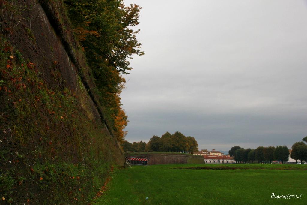 Senamiesčio tvora