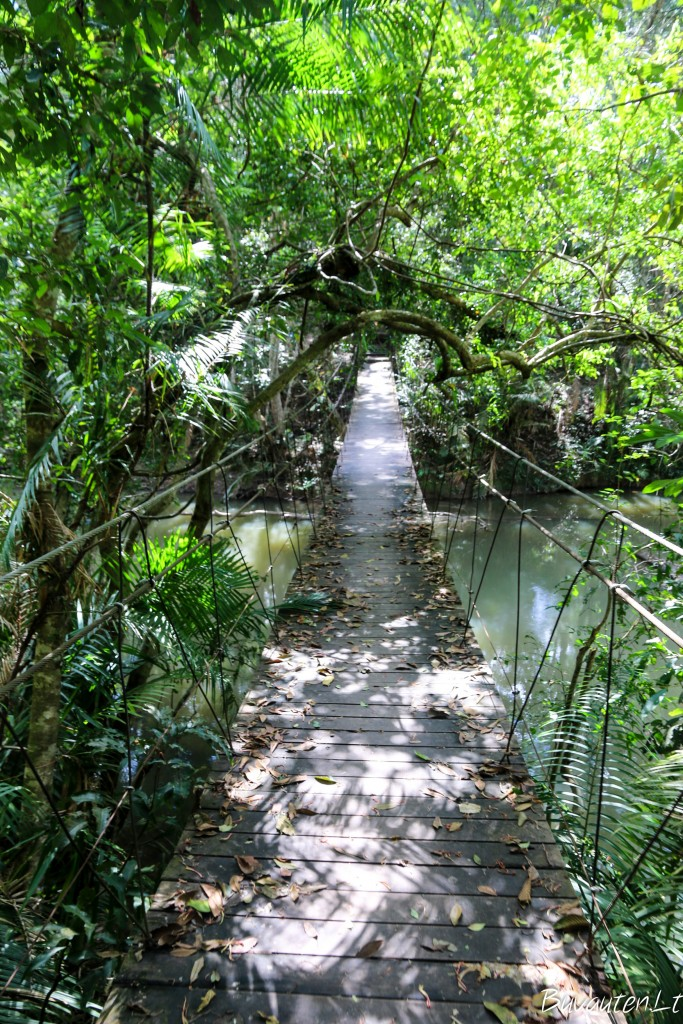 Khao Yai nacionalinis parkas