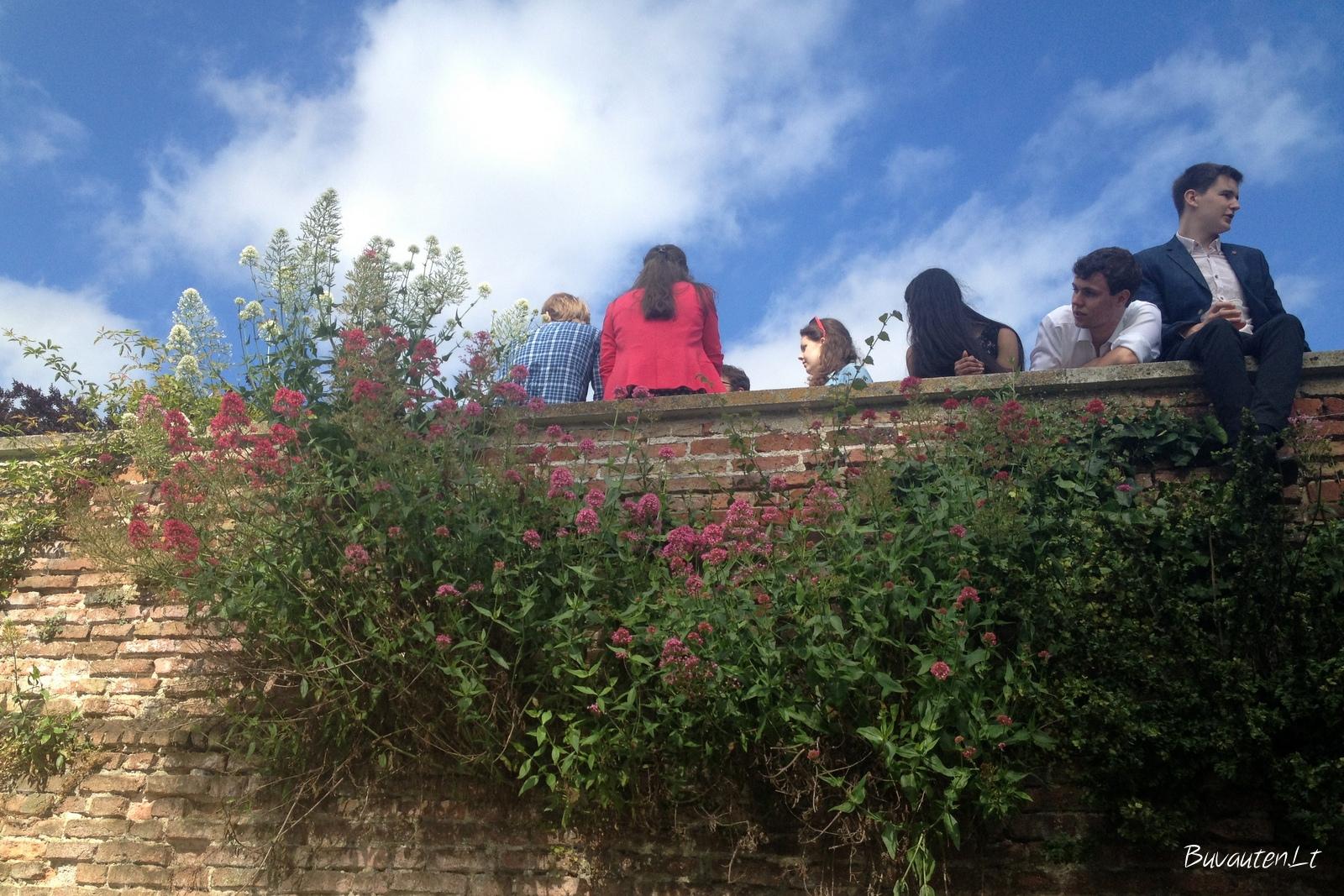 Kembridžo studentai ant koledžo tvoros