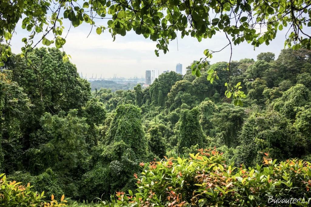 Žalioji SIngapūro dalis - miesto parkai, kur pasijauti lyg atogražų miške