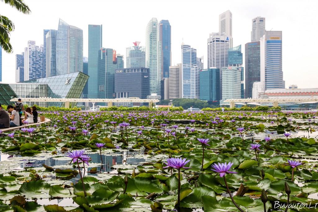 Singapūro verslo centras, skęstantis vandens lelijose