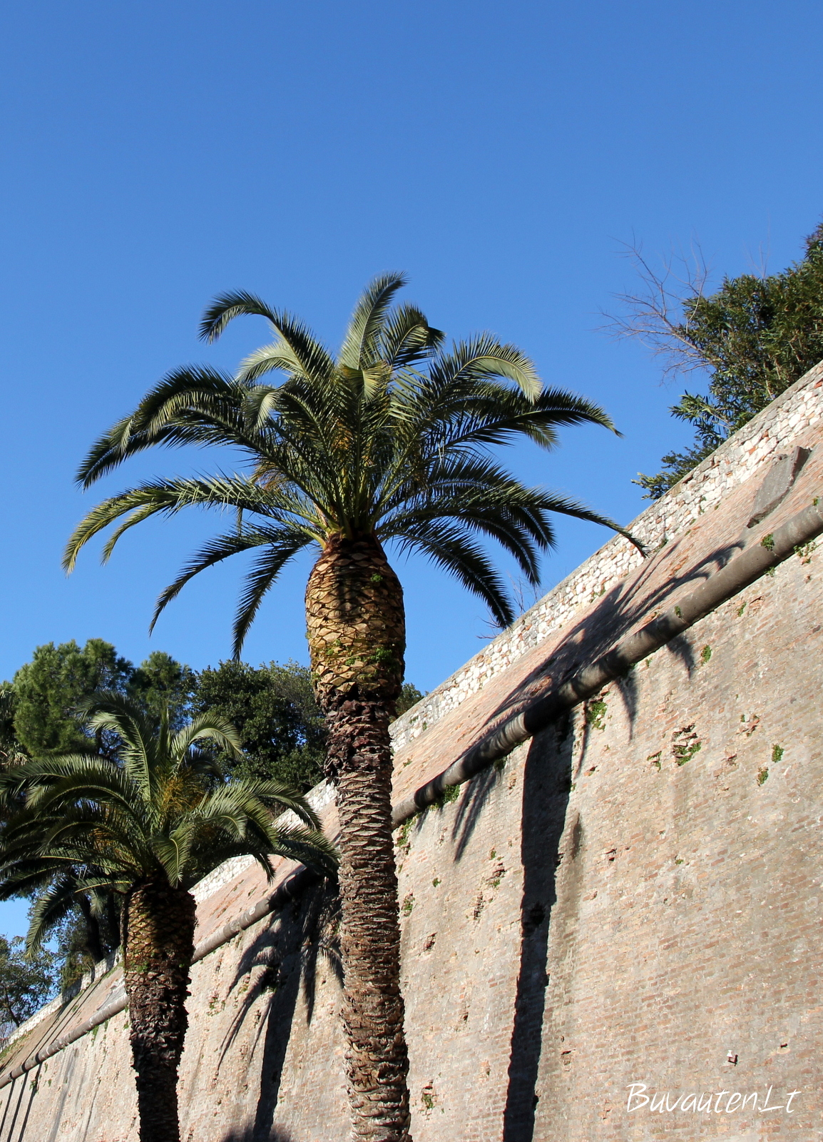 Zadaro senamiesčio tvora