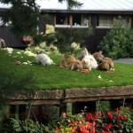 Vieta, dėl kurios verta aplankyti Palangą: Floros simfonija
