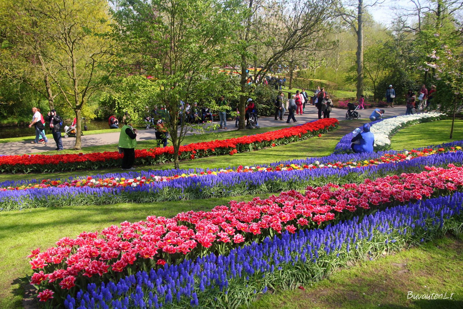 Gėlynai parke