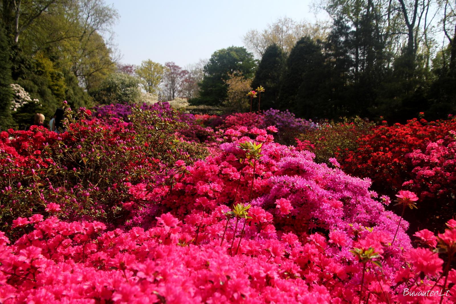 Spalvos japoniškame parke