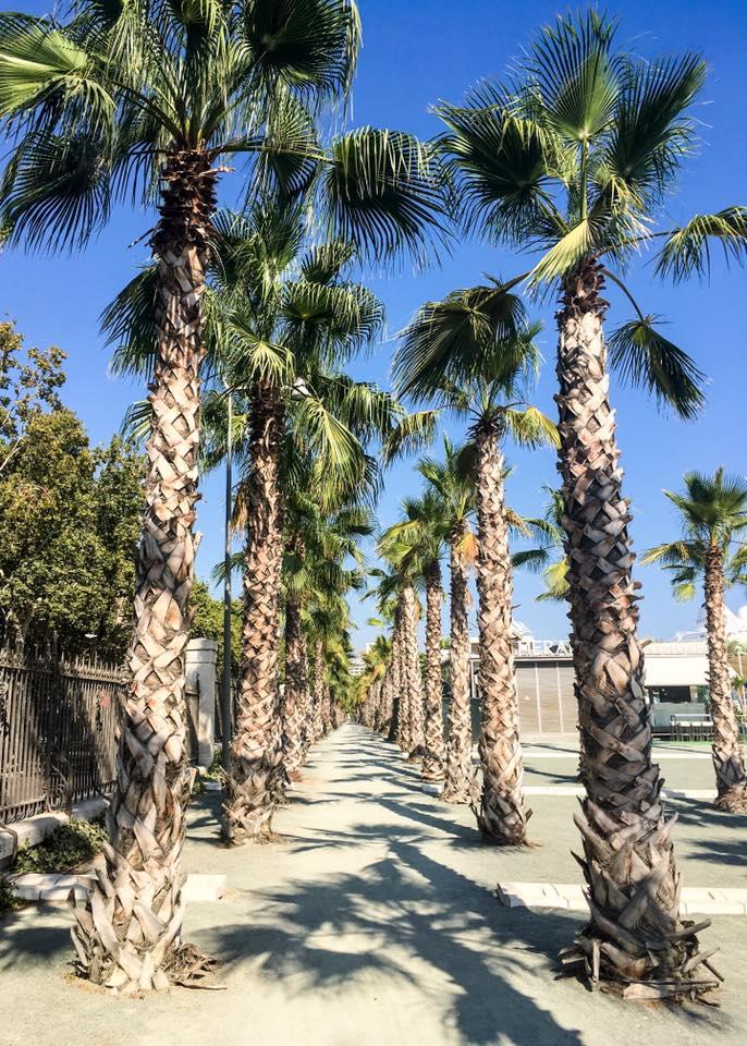 Palmių alėja Malagoje