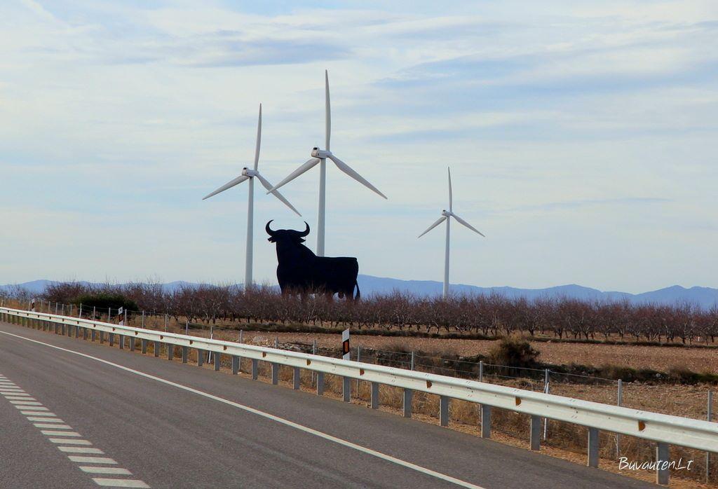 """Pakeliui į Madridą sutikome ne vieną tokį bulių - Ispanijos simbolį, brendžio """"Veterano"""" prekės ženklą"""