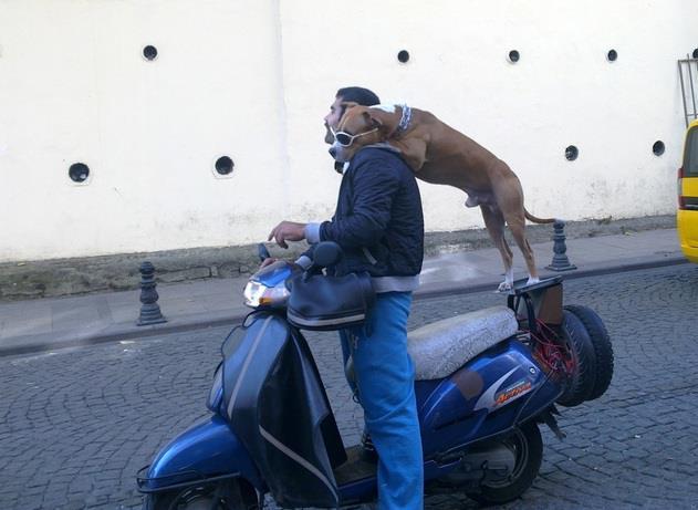 Smagus vaizdelis iš Stambulo gyvenimo
